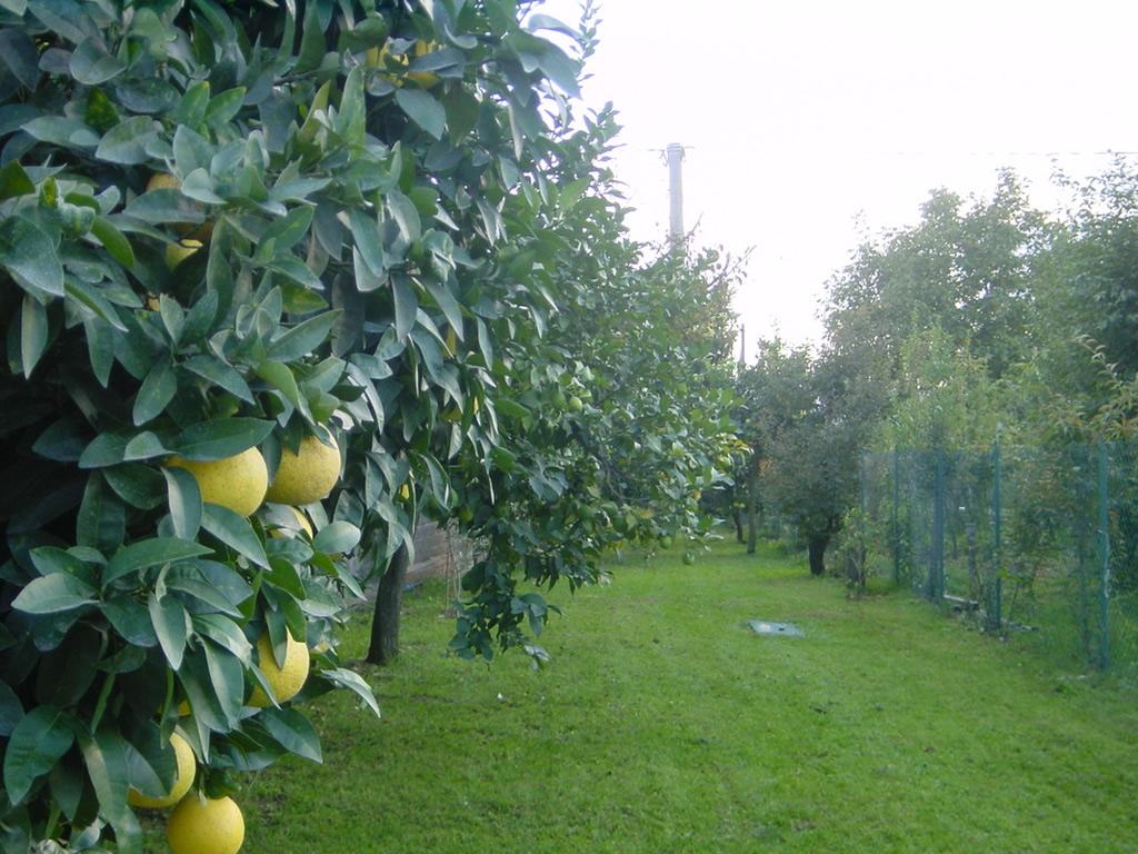 Realizzazione chiavi in mano di impianti da frutto