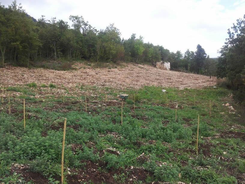 Realizzazione chiavi in mano impianti per forestazione